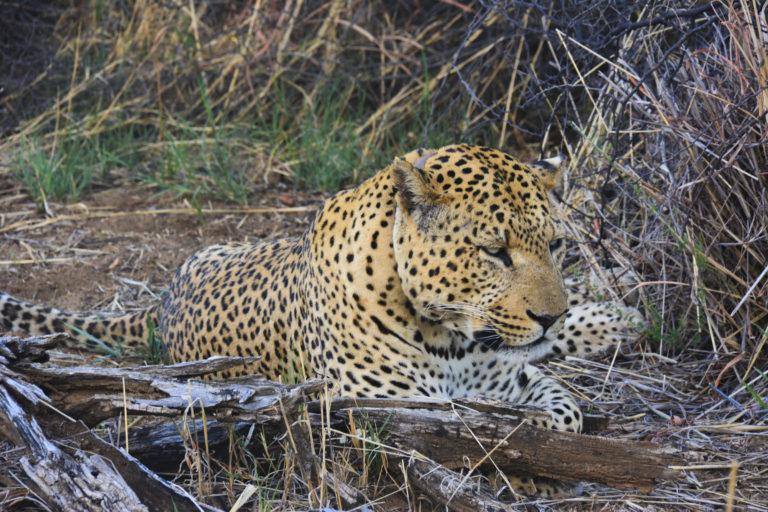 Luipaard - Luxe Safari Namibië | Luxe Safari