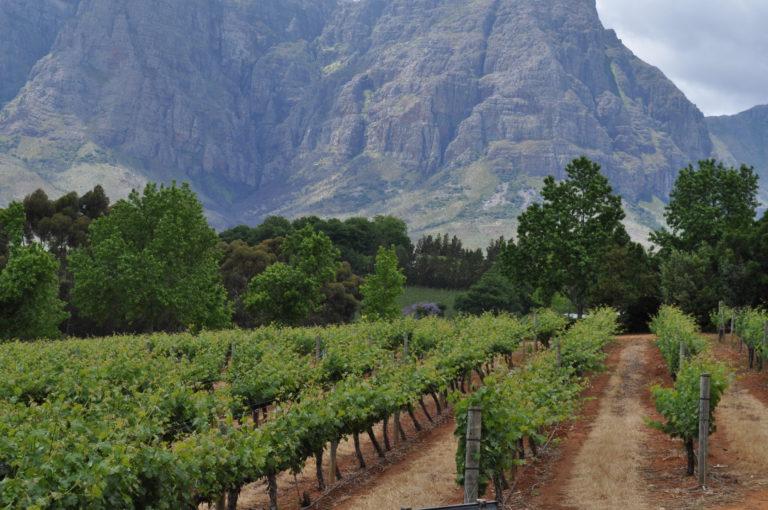Winelands Zuid-Afrika - Luxe Safari Zuid-Afrika | Luxe Safari