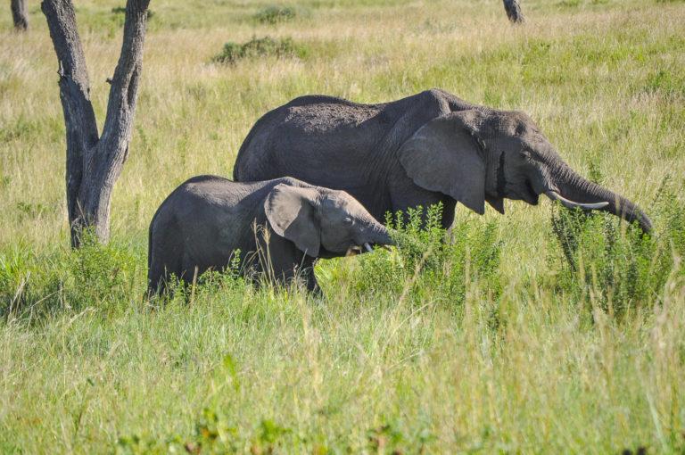 Olifanten - Luxe Safari Kenya | Luxe Safari