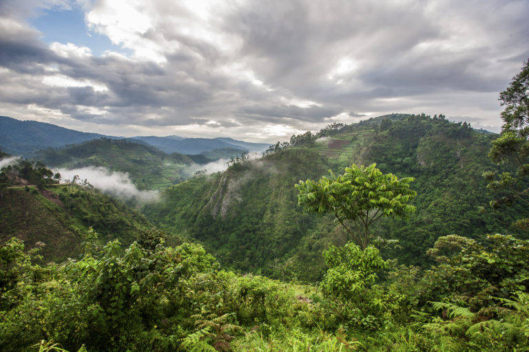 Bwindi Impenetrable Forest National Park - Luxe Safari Oeganda | Luxe Safari