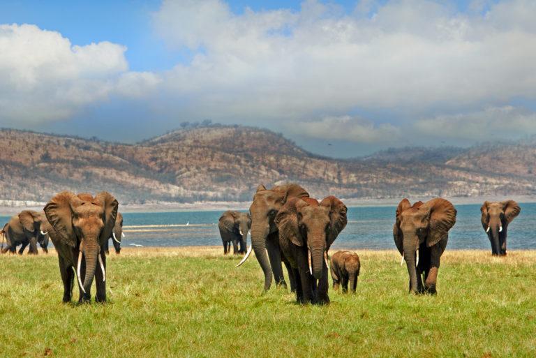 Olifanten - Luxe Safari Zimbabwe | Luxe Safari