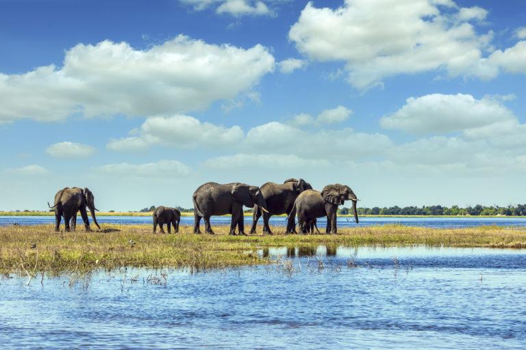 Olifanten - Luxe Safari Botswana | Luxe Safari