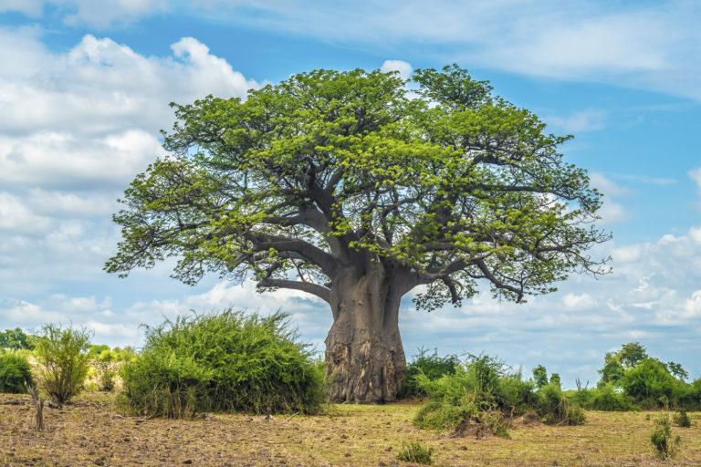 Chobe National Park - Luxe Safari Botswana | Luxe Safari